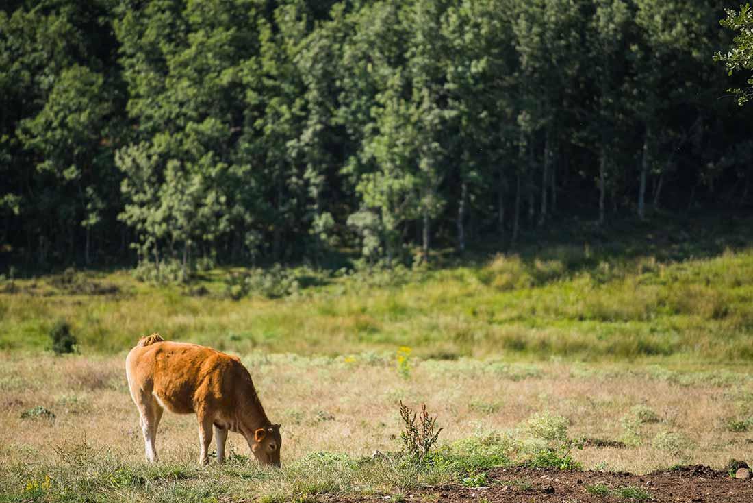 carne de animales criados en libertad